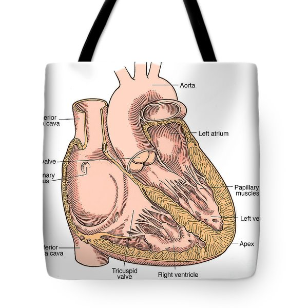 Illustration Of Heart Anatomy Tote Bag by Science Source