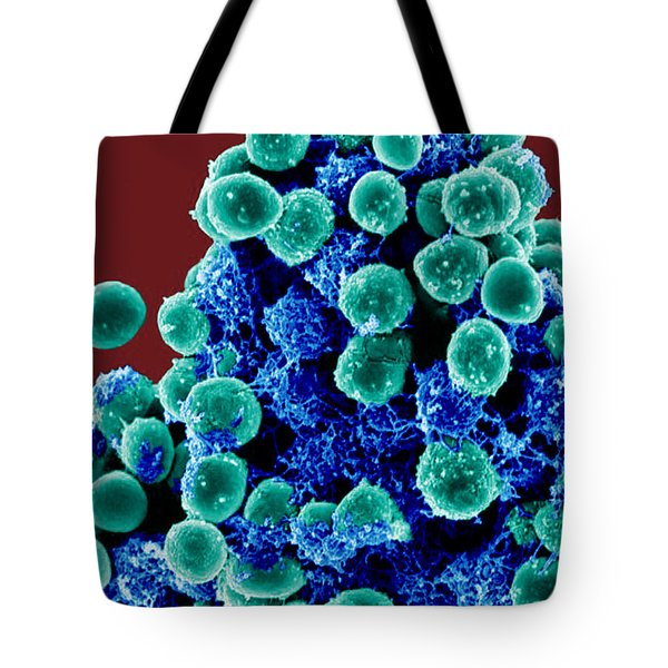 Staphylococcus Epidermidis Bacteria, Sem Tote Bag by Science Source