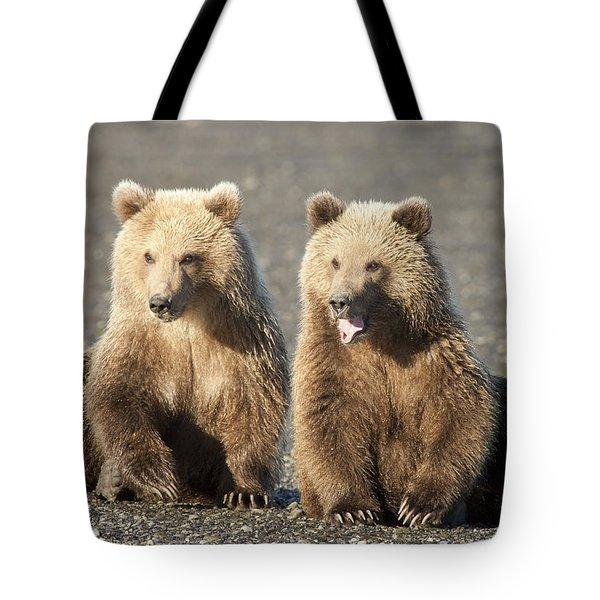 Grizzly Bear Ursus Arctos Horribilis Tote Bag by Matthias Breiter