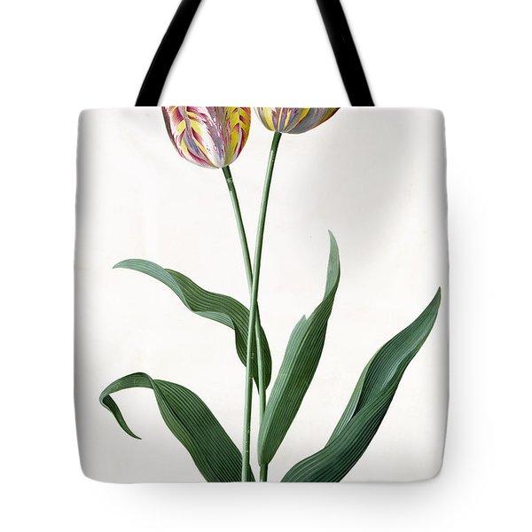5 Tulip Tulip  Tote Bag by Georg Dionysius Ehret