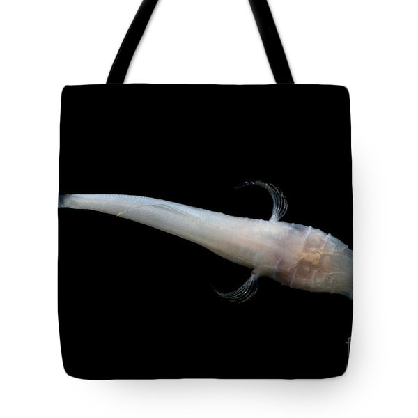 Alabama Cavefish Tote Bag by Dante Fenolio