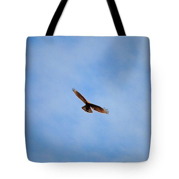 Red Shouldered Hawk In Flight Tote Bag by Jai Johnson