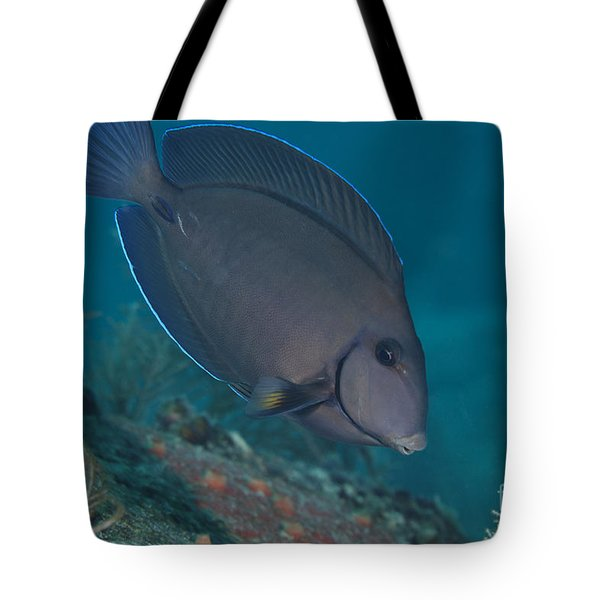 A Blue Tang Surgeonfish, Key Largo Tote Bag by Terry Moore
