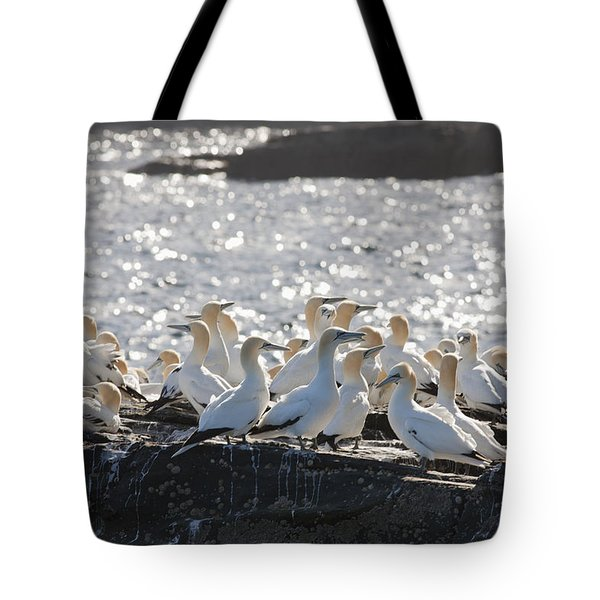 A Flock Of Gannets Standing On A Rock Tote Bag by John Short
