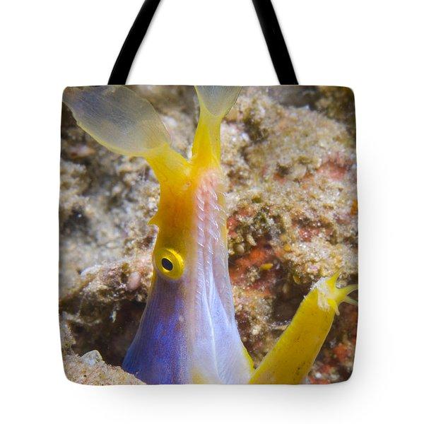 A Male Ribbon Eel Peering Tote Bag by Steve Jones