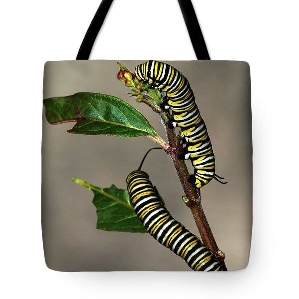 A Pair Of Monarch Caterpillars Tote Bag by Sabrina L Ryan
