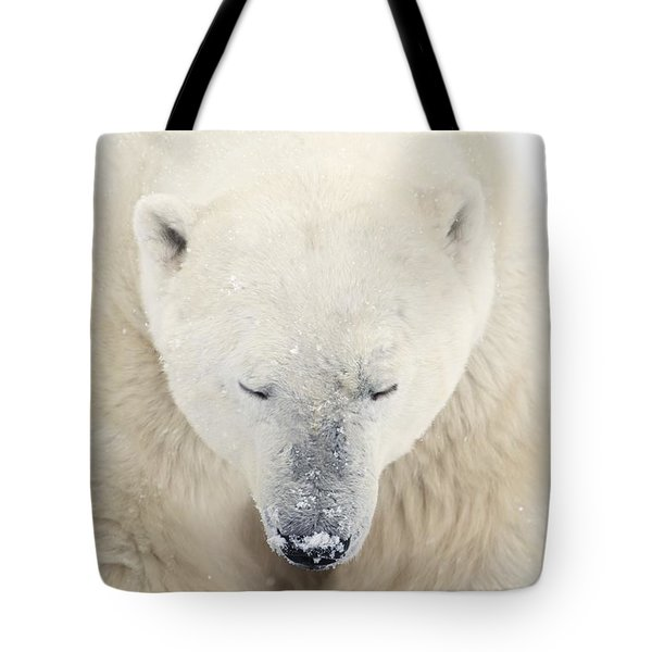 A Polar Bear Ursus Maritimus Resting Tote Bag by Richard Wear
