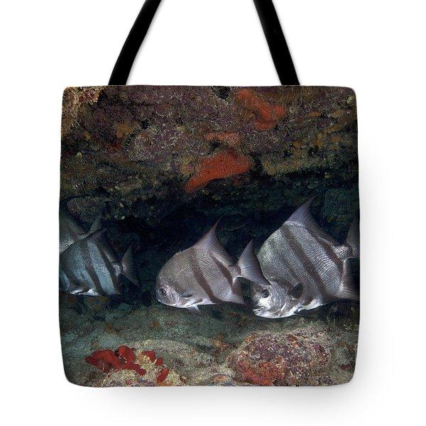 A School Of Atlantic Spadefish Tote Bag by Terry Moore