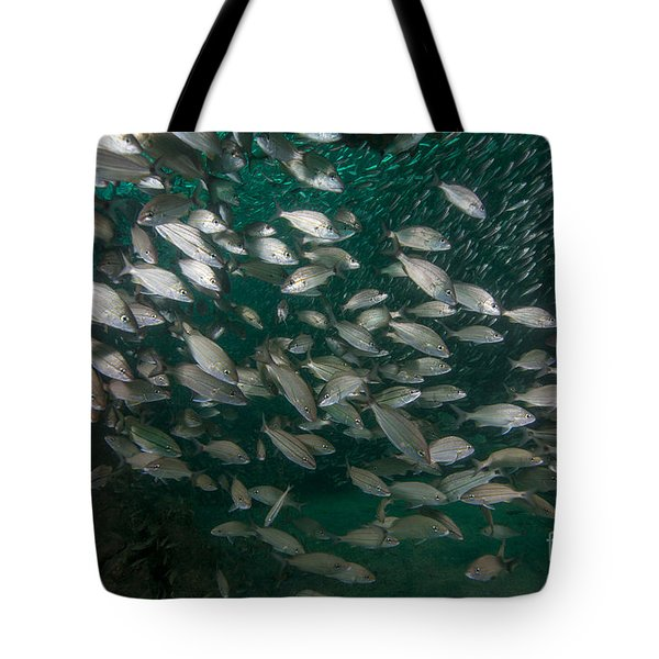 A School Of Tomtate And Glass Minnows Tote Bag by Michael Wood