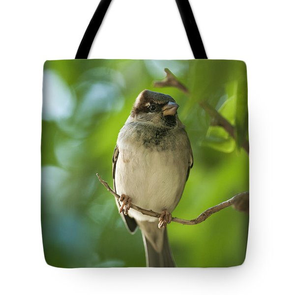 A Sparrow Perched On A Small Branch Tote Bag by Ben Welsh