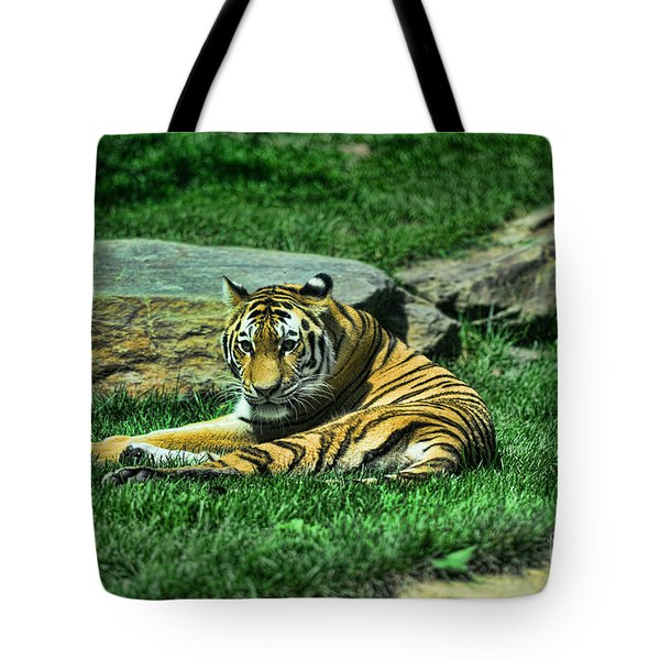 A Tiger's Gaze Tote Bag by Paul Ward