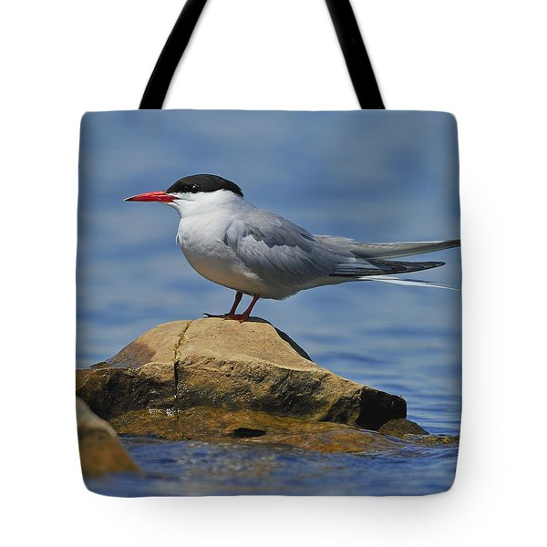 Adult Common Tern Tote Bag by Tony Beck