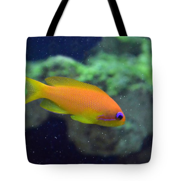 African Anthias Tote Bag by Sandi OReilly