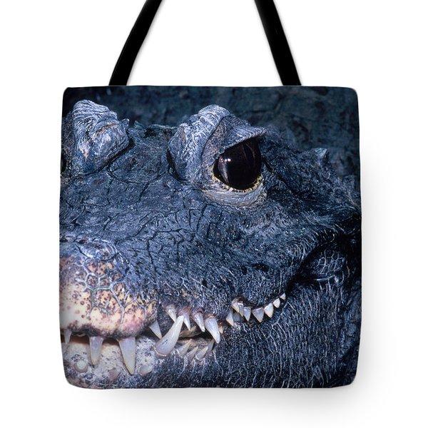 African Dwarf Crocodile Tote Bag by Dante Fenolio