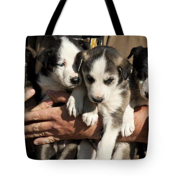 Alaskan Huskey Puppies Tote Bag by John Greim