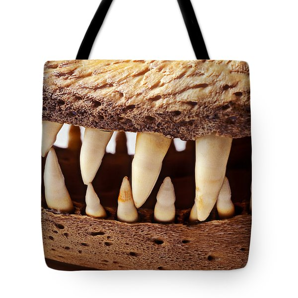 Alligator skull teeth Tote Bag by Garry Gay