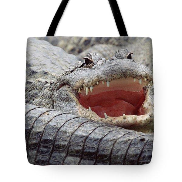 American Alligator Alligator Tote Bag by Tim Fitzharris