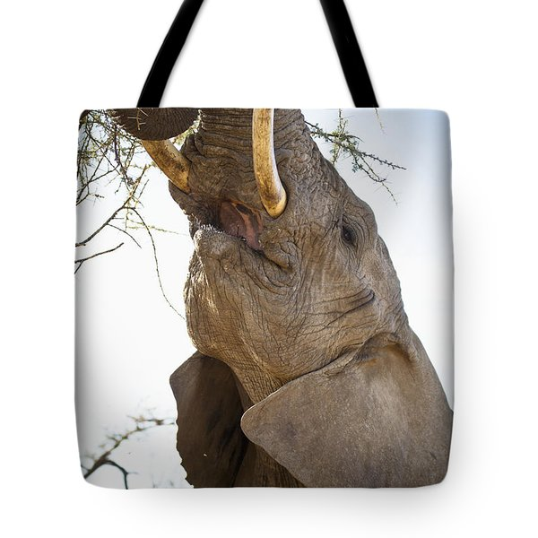 An Elephant Eats The Leaves High Up In Tote Bag by David DuChemin