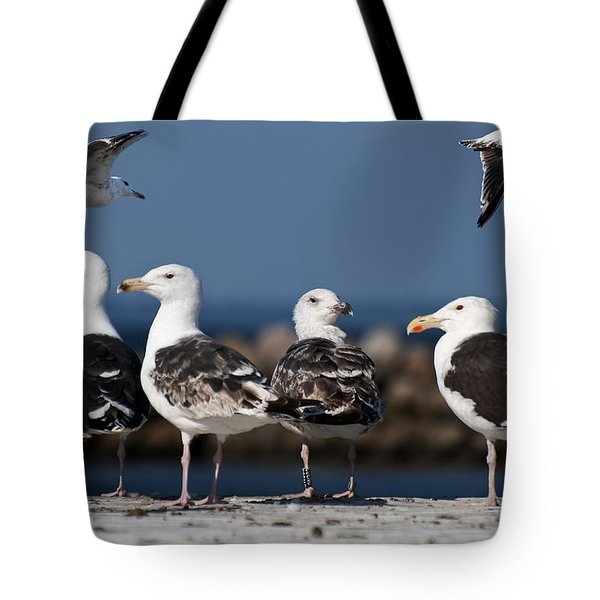 Annual Seagull Congress Tote Bag by Michael Mogensen