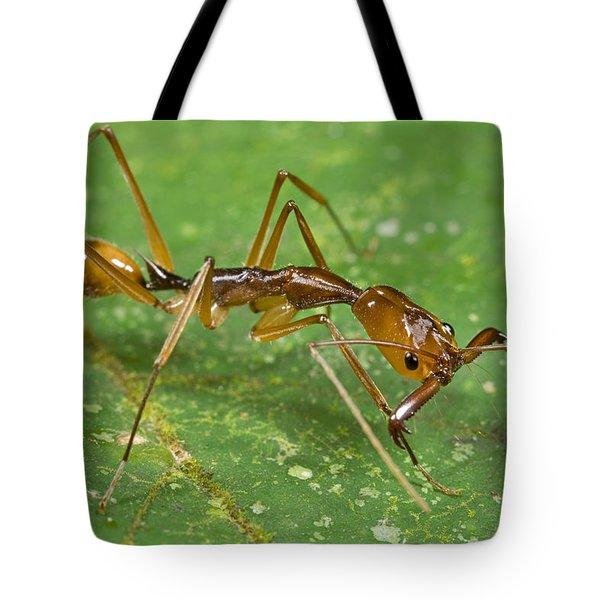 Ant Showing Large Mandibles Guyana Tote Bag by Piotr Naskrecki
