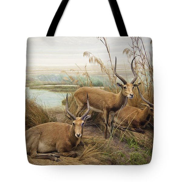 Antelope In The Grass Near The River Tote Bag by Laura Ciapponi