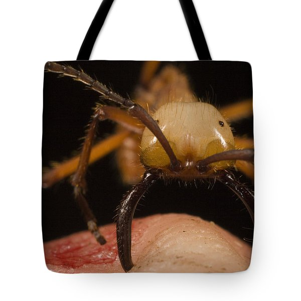 Army Ant Eciton Biting Finger Tote Bag by Mark Moffett