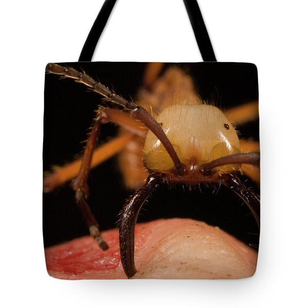 Army Ant Eciton Hamatum Major Worker Tote Bag by Mark Moffett