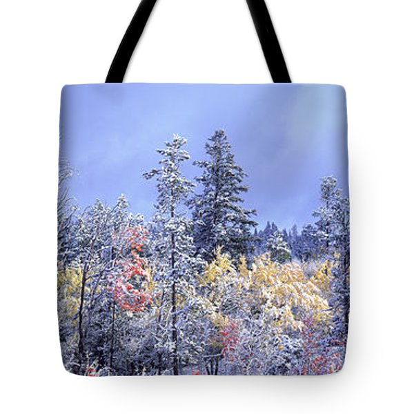 Aspens In Fall With Snow, Near 100 Mile Tote Bag by David Nunuk