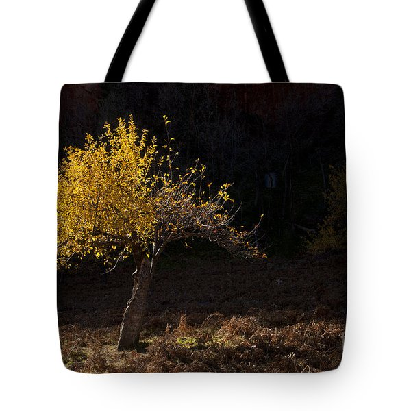 Autumn Light Tote Bag by Mike  Dawson