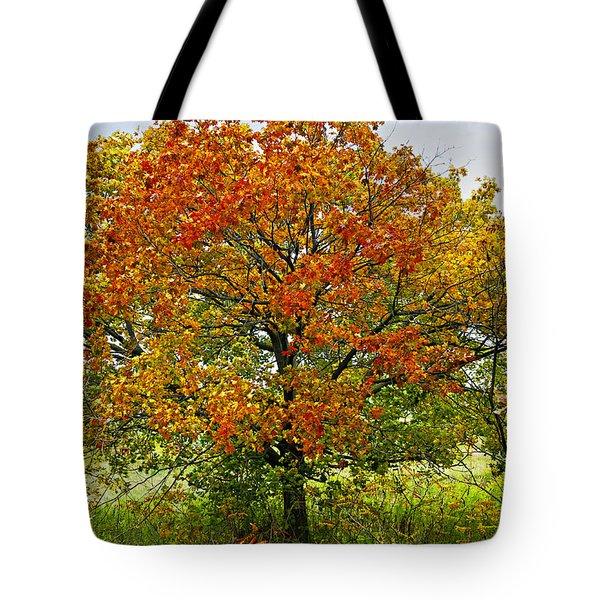 Autumn Maple Tree Tote Bag by Elena Elisseeva