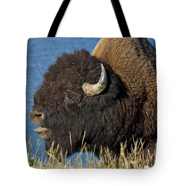 Baaa You Come Here Tote Bag by Paul Cannon