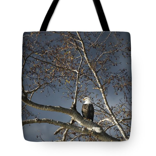 Bald Eagle In A Tree Tote Bag by Con Tanasiuk