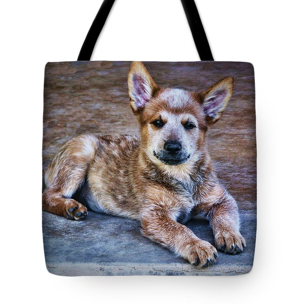 Bandit  Tote Bag by Saija  Lehtonen