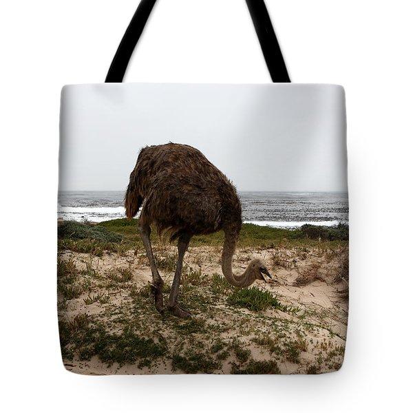 Beach Bird Tote Bag by Aidan Moran
