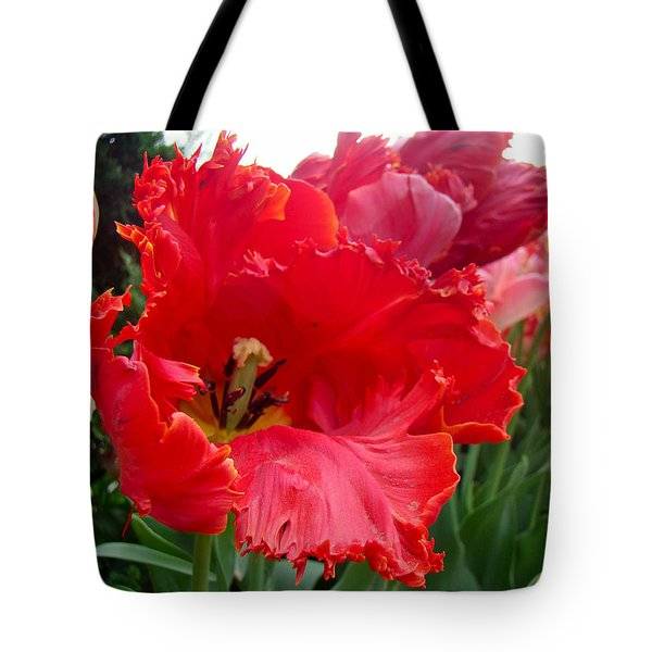 Beautiful From Inside and Out - Parrot Tulips in Philadelphia Tote Bag by Mother Nature