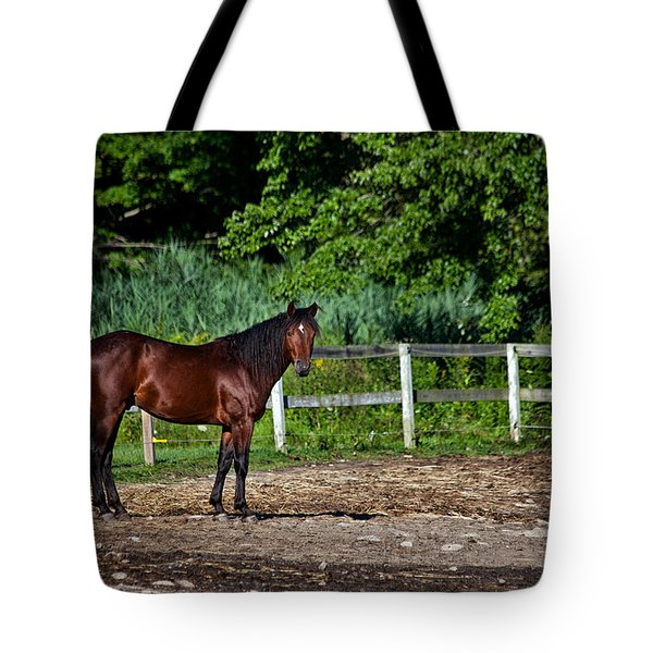 Beauty Of A Horse Tote Bag by Karol Livote