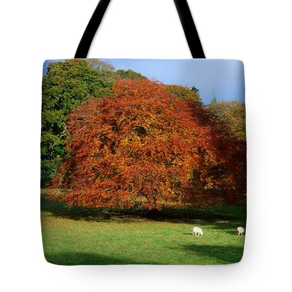 Beech Tree, Glendalough, Co Wicklow Tote Bag by The Irish Image Collection