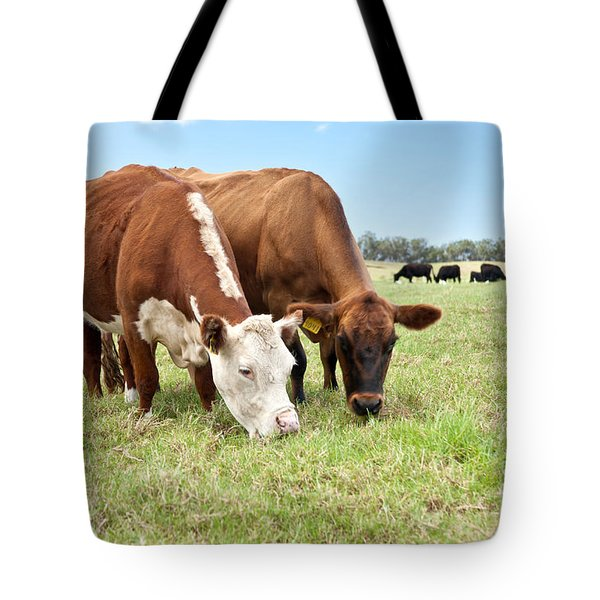 Beef Cattle Grazing In Pasture Tote Bag by Inga Spence and Photo Researchers