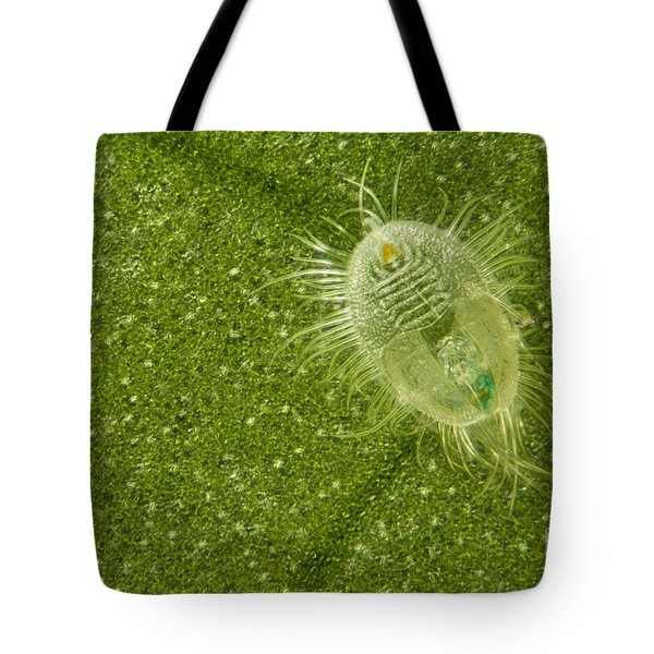 Beetle Larvae On Leaf Tote Bag by Raul Gonzalez Perez