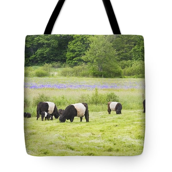 Belted Galloway Cows Pasture Rockport Maine Photograph Tote Bag by Keith Webber Jr