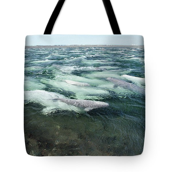 Belugas Swimming And Molting Tote Bag by Flip Nicklin