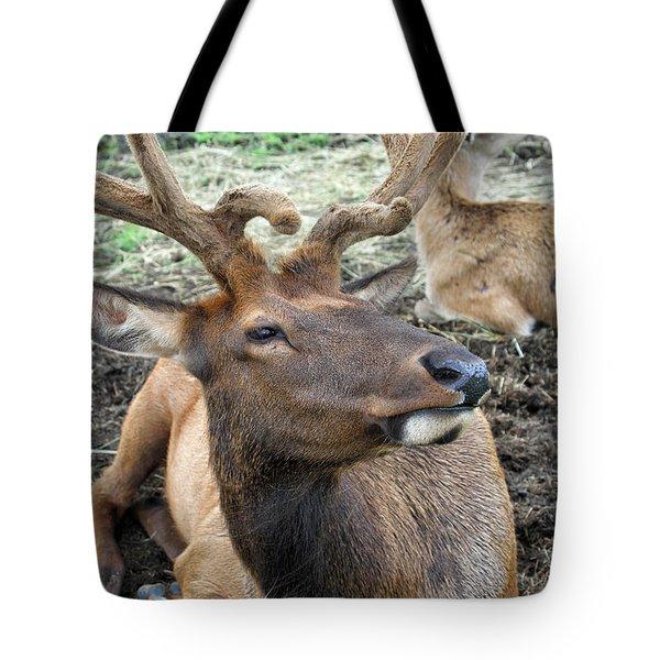 Big Fella Tote Bag by Karol Livote