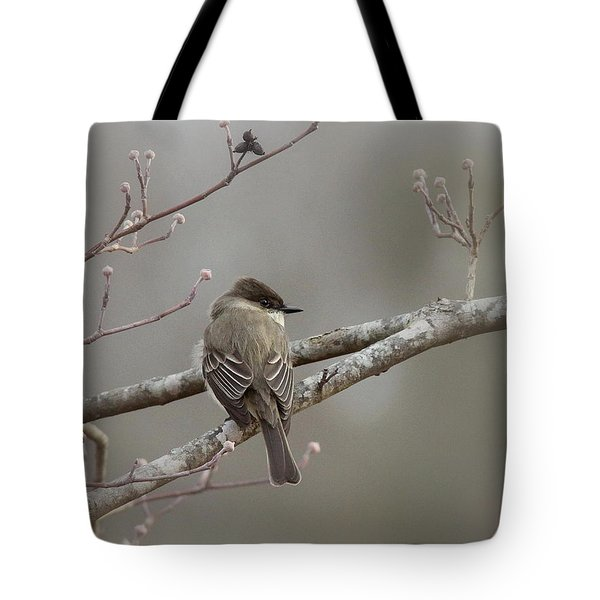Bird - Eastern Phoebe - Very Contented Tote Bag by Travis Truelove