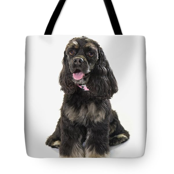 Black Cocker Spaniel With Golden Boots Tote Bag by Corey Hochachka