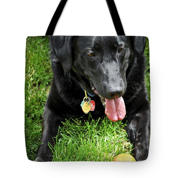 Black lab dog with a ball Tote Bag by Elena Elisseeva