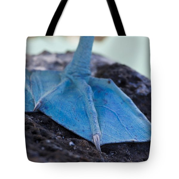 Blue Footed Booby Tote Bag by Dave Fleetham