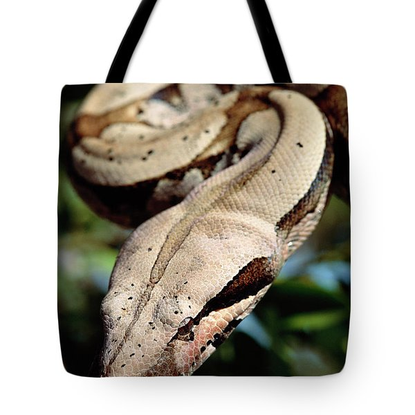 Boa Constrictor Boa Constrictor Tote Bag by Claus Meyer