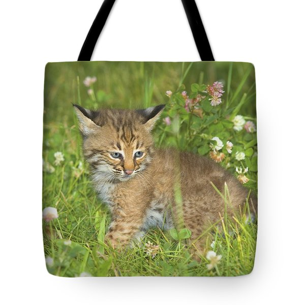 Bobcat Kitten Tote Bag by John Pitcher