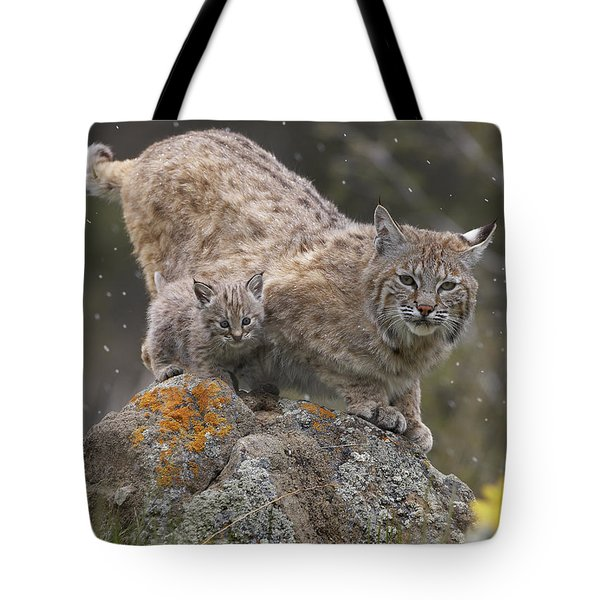 Bobcat Mother And Kitten In Snowfall Tote Bag by Tim Fitzharris