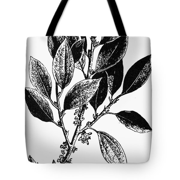 Botany: Coca Shrub Tote Bag by Granger